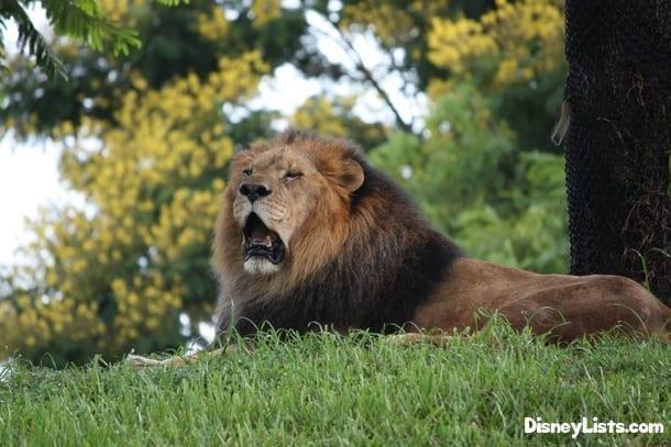 8-3-Lion