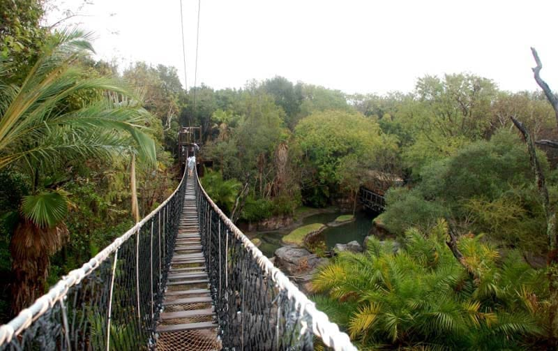 Wild Africa Trek Bridge