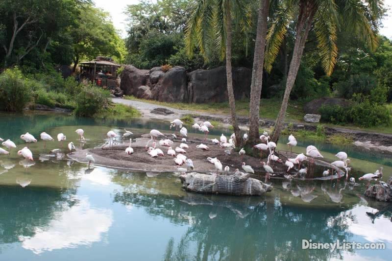 Flamingo Island Hidden Mickey