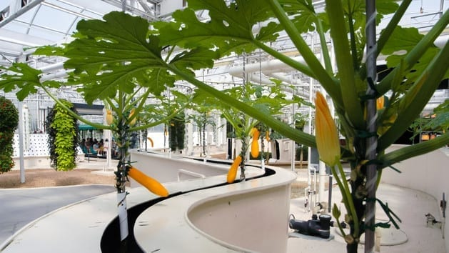 The Land Greenhouse
