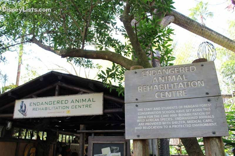 Endangered Animal Rehab