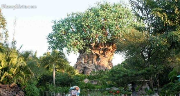 Featured-Tree of Life