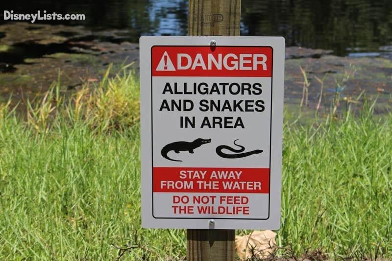 Warning Signs at Disney World