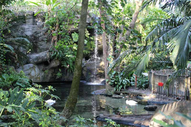 6 Facts And Secrets About The Oasis Exhibits At Disney S