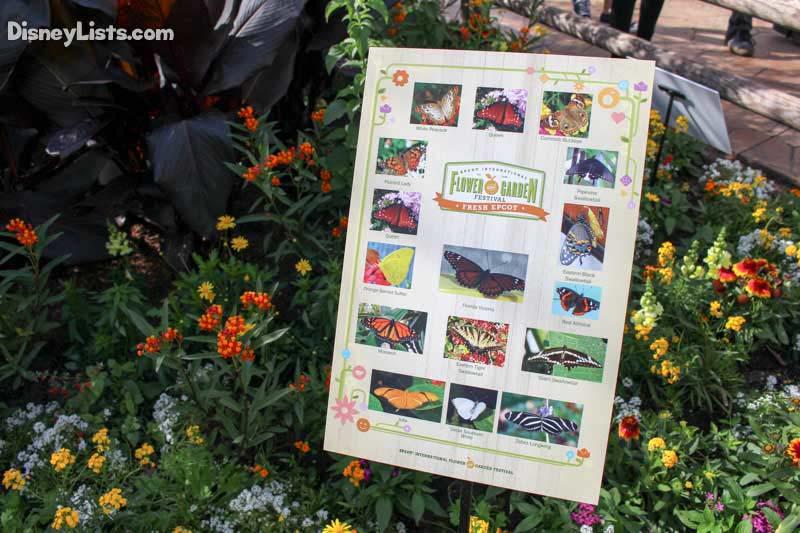 Butterflies Flower And Garden